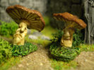 Mushrooms of the enchanted forest